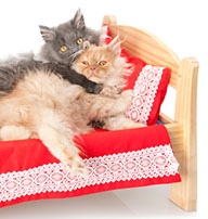 two cats cuddling in small bed