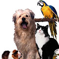 dog,cat,bird,guinea pig